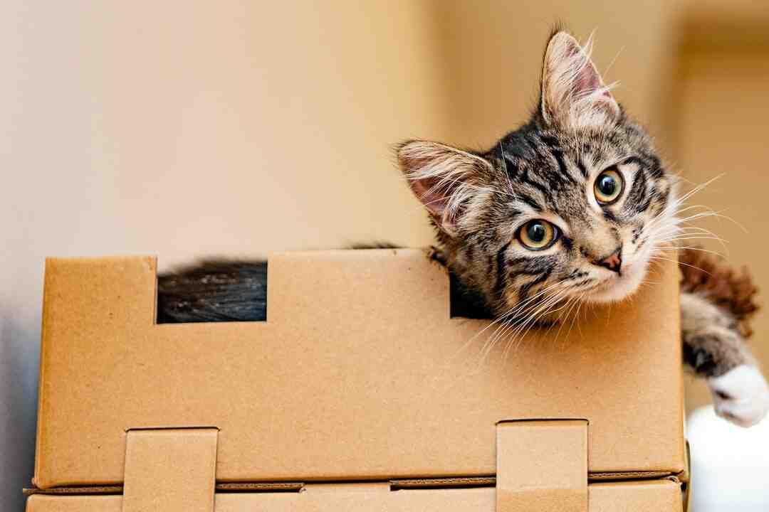 Comment construire une maison en carton