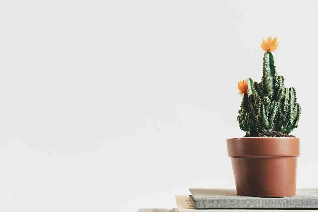 Comment faire pousser un cactus epiphyllum
